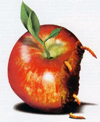 manzanapodrida.jpg