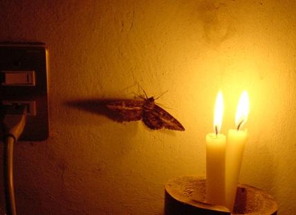 moth-flame.jpg