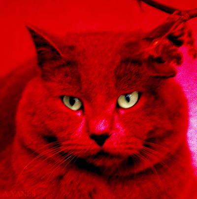 gato-rojo-2.jpg