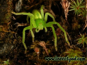 20080229_julia_faelt_green_spider_02_portrait